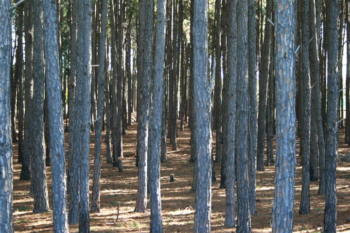 banboo-forest_mg_1515